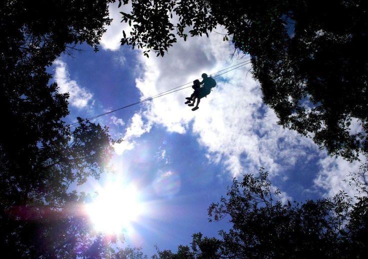 Canopy gliding in the trees of South Africa
