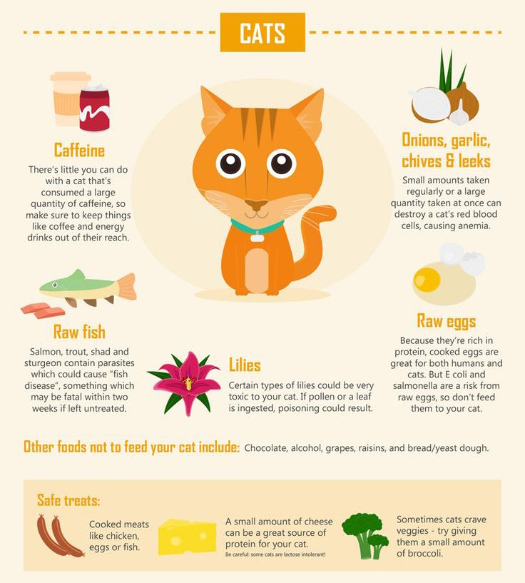 What Foods Are Toxic To Dogs And Cats