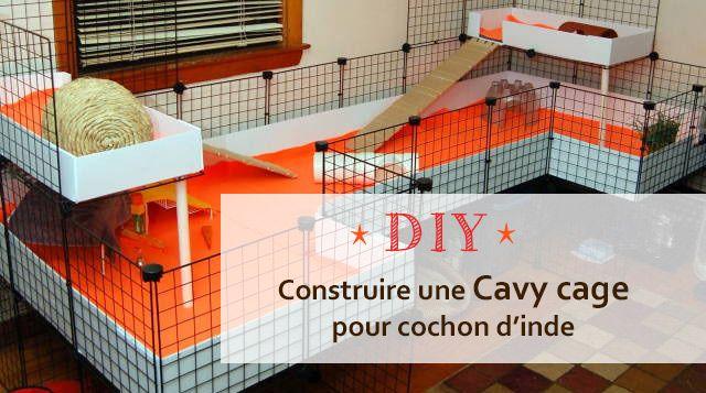 Comment construire une Cavy cage pour cochon d'inde