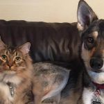 Woodhouse e Raven: una bella amicizia