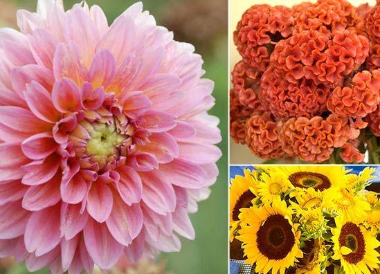 Homegrown Wedding Flowers | Allen's Blog - P. Allen Smith Garden Home Inclues best flowers for a Fall wedding