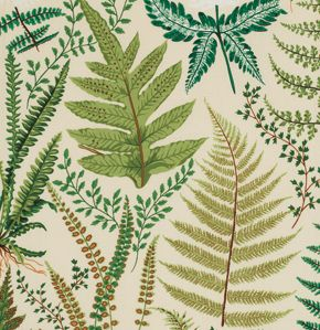 Hyggeligt Fabrics - Philip Jacobs - Ferns - natural per 1/2 yard, $5.75 (http://www.hyggeligt.ca/philip-jacobs-ferns-natural-per-1-2-yard/)
