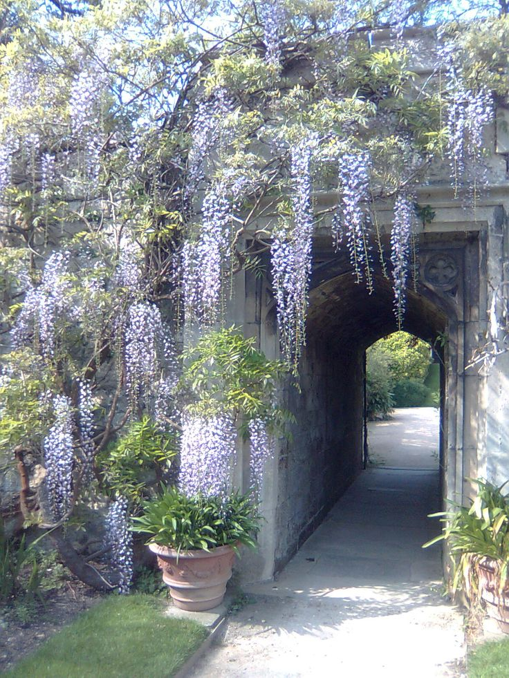 I love walking around the gardens here. Worcester College, Oxford