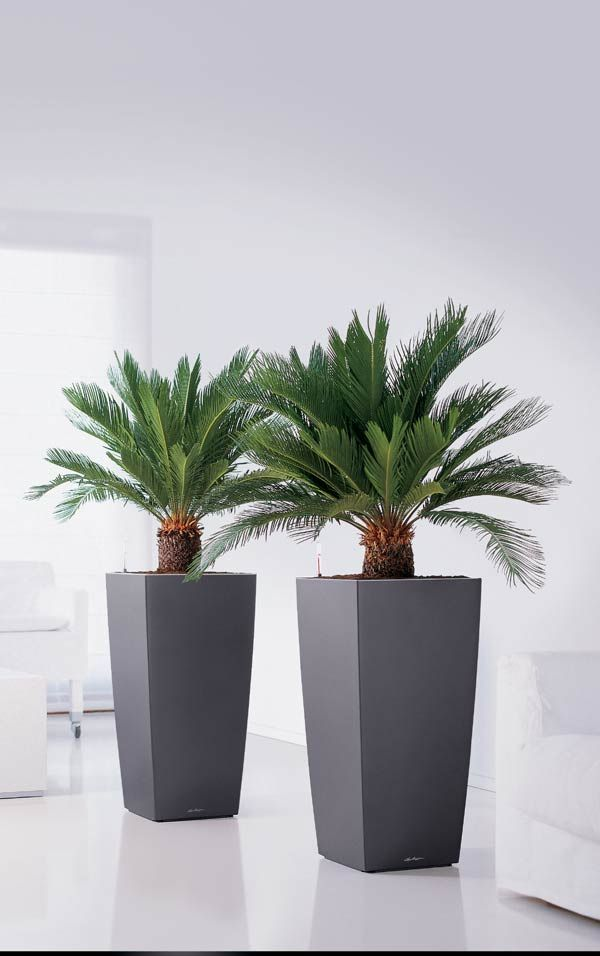 planters planters and indoor plant containers for sale online uk - Tall Potted Plants