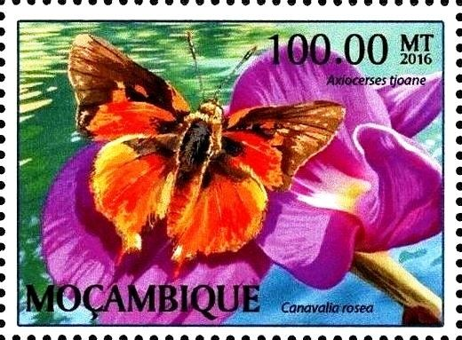 Stamp: Canavalia rosea (Mozambique) (Butterflies) Col:MZ 2017-01/1