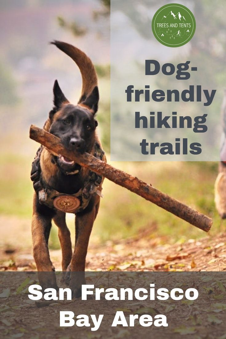 Dog Friendly Hiking Trails Near San Francisco Dog Friends