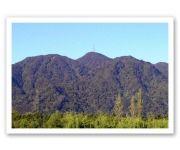 Mt Te Aroha