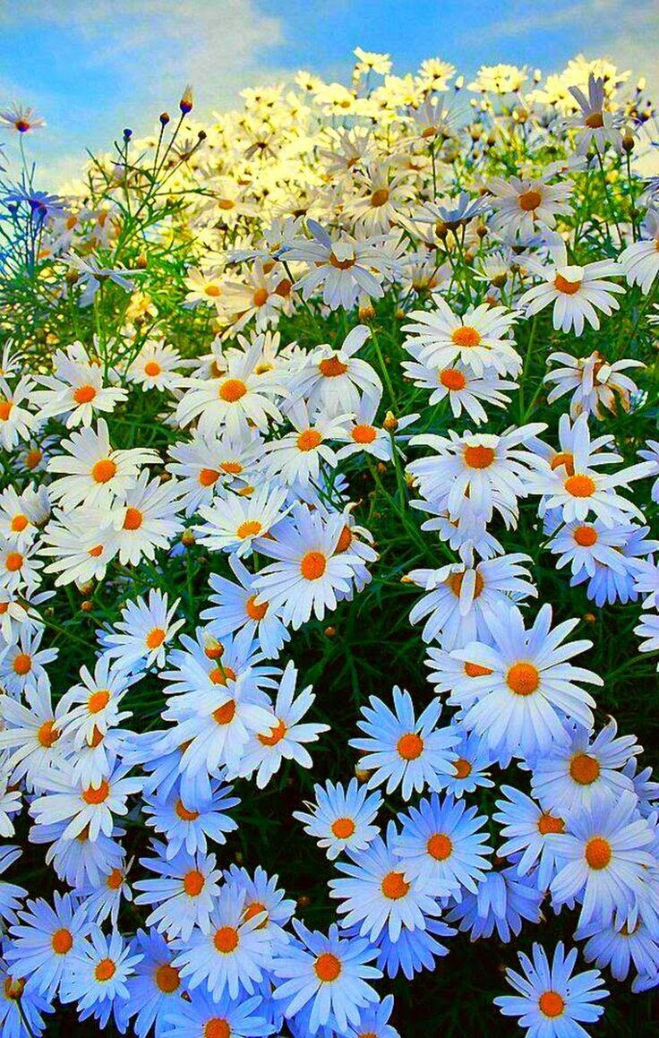 Garden decor kijiji   best Flores u Jardinagem images on Pinterest  Plants Garden