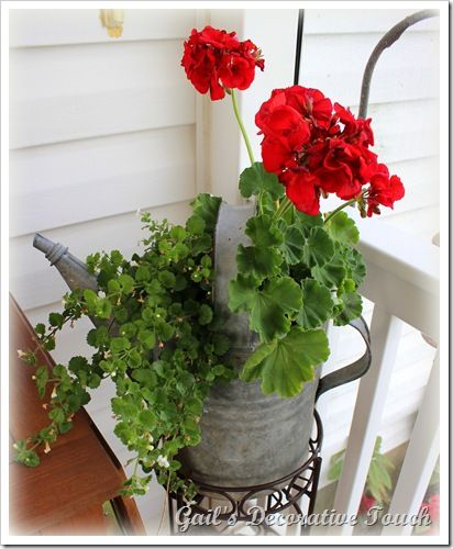 geraniums in old watering can