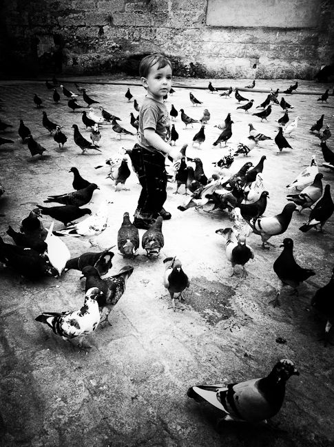 Cuba | Boy and birds | whiteonricecouple
