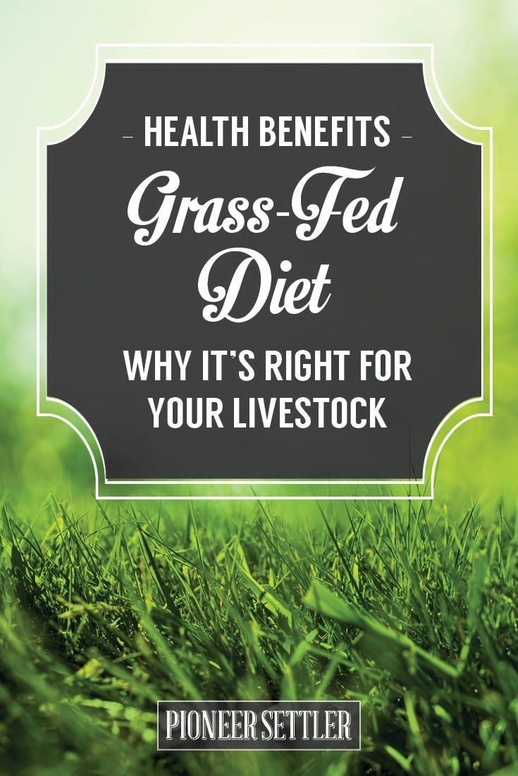 Benefits of Grass Fed Beef – Why Your Livestock Need a Grass-Fed Diet | Try Many Types Of Farming For You And Your Homestead