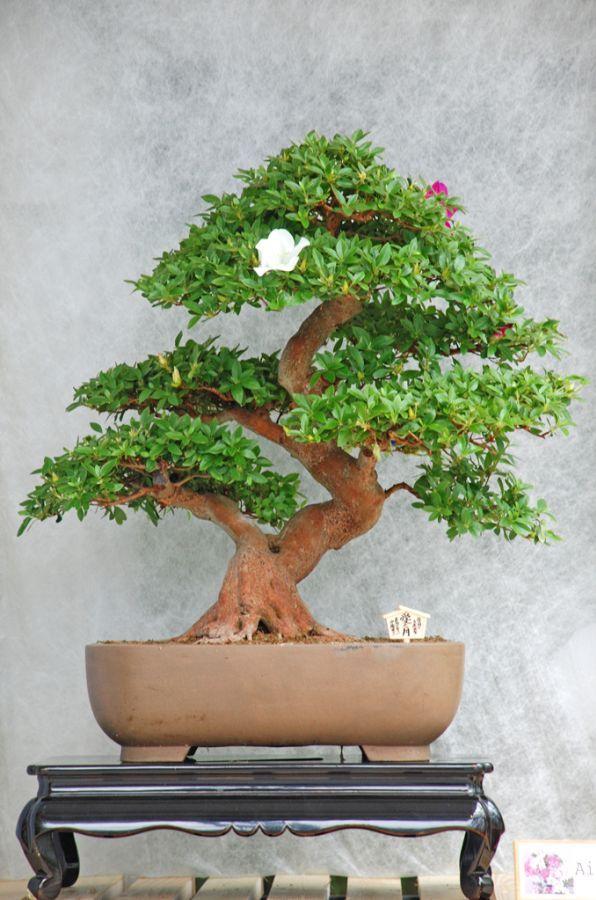 143 best Bonsai Tree Tools images on Pinterest | Bonsai, Bonsai ...