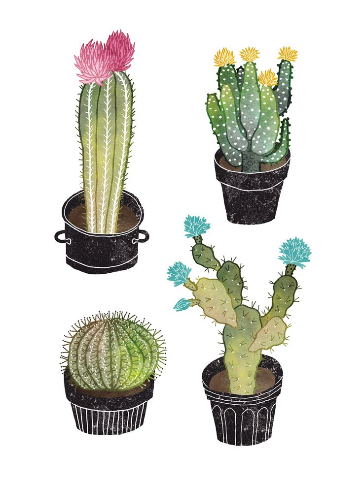 Cactus illustration by Sanny van Loon. Cactus / Cacti / Cactuses with flowers www.sannyvanloon.com