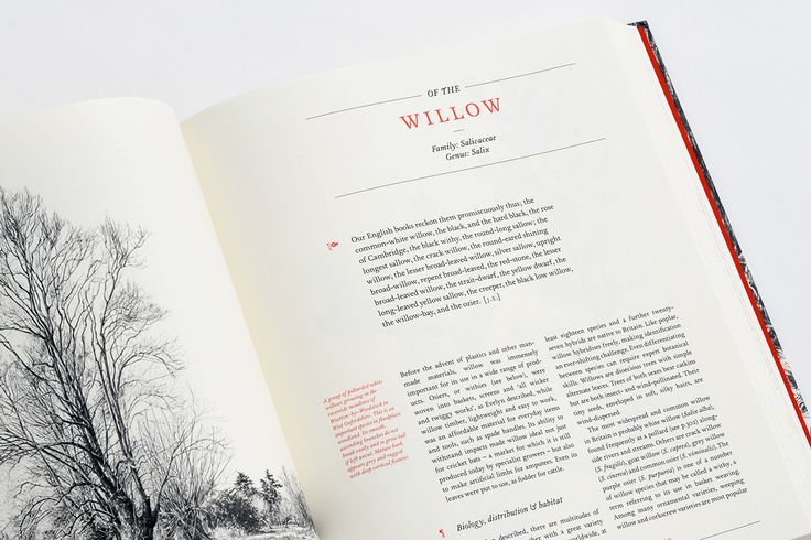 Book Design Inspiration: The New Sylva – Celebrating the UK's Forests and Trees