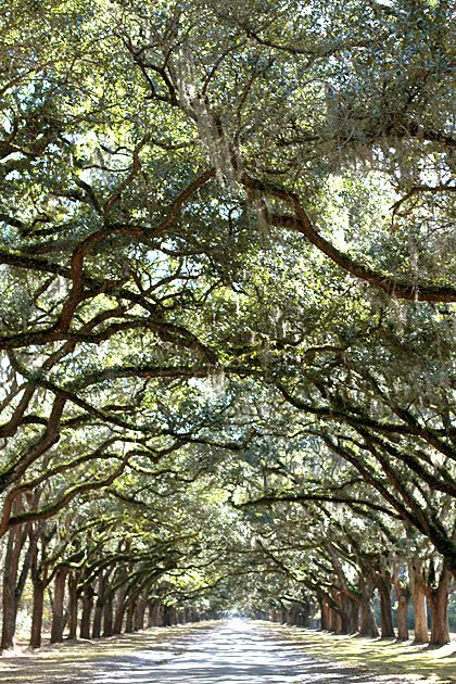Wormsloe Plantation, Savannah, Georgia, USA