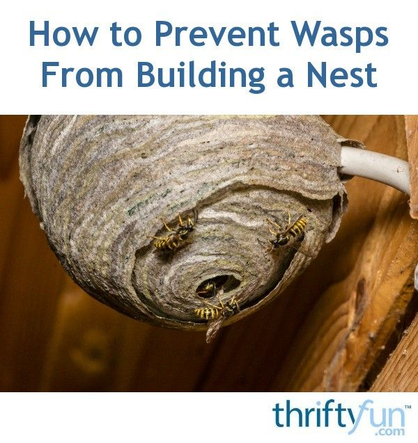 149 Best Pest Control Images On Pinterest
