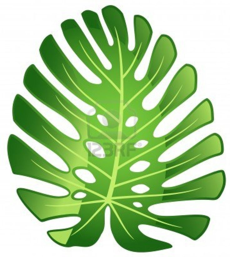 Leaf tropical plant - Monstera. Vector illustration. Stock Photo - 9466958