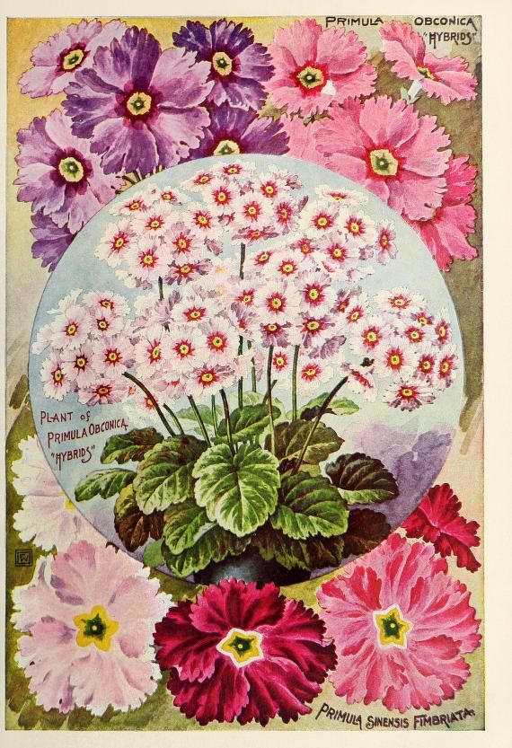 John Lewis Childs Seed Company Catalogue - rare flowers, vegetables & fruits - 1901