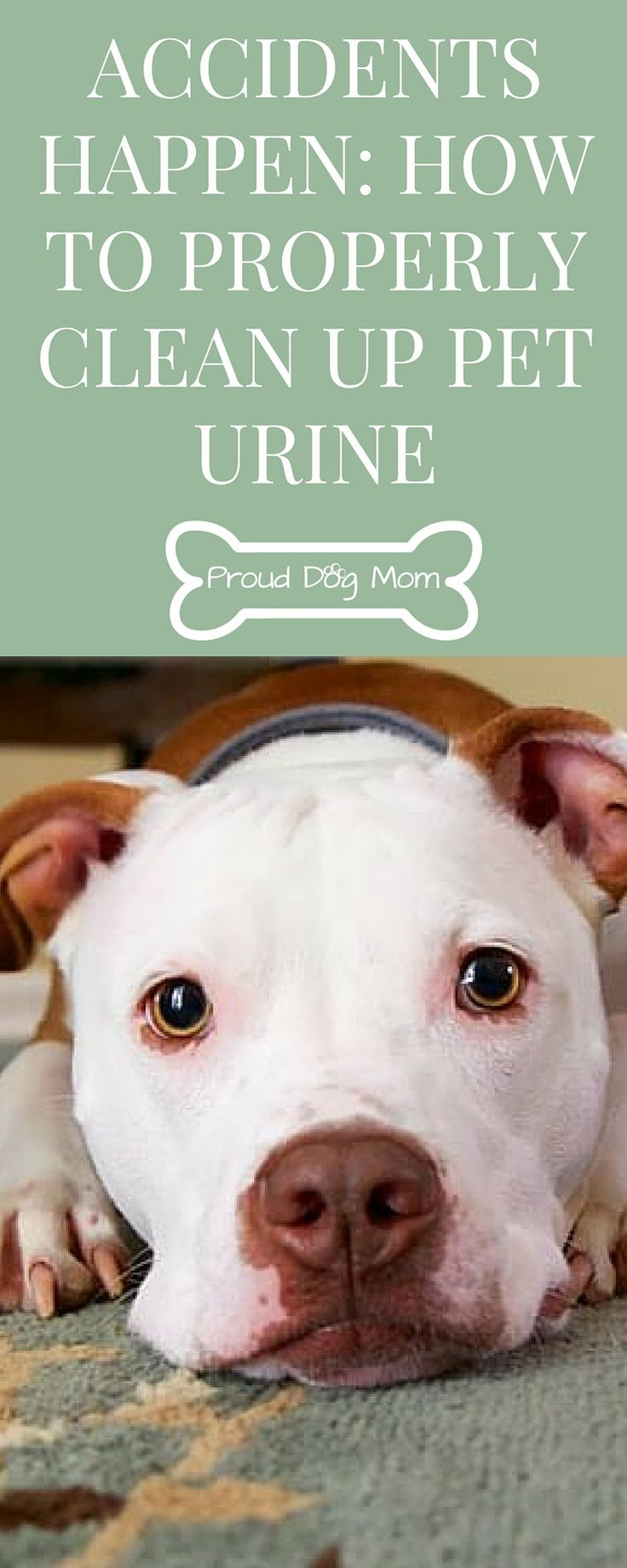 Best 25+ Cleaning pet urine ideas on Pinterest | Dog urine ...