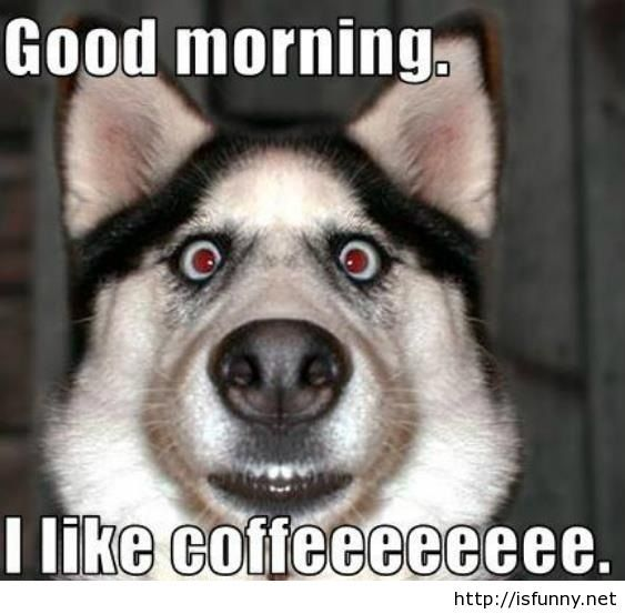 Funny good morning images and quotes funny picture