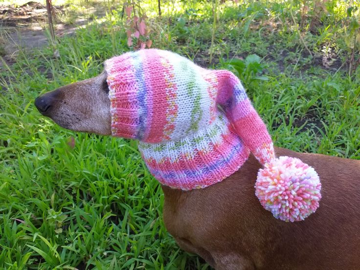 Winter knitted hat for small dog,hat for dog in 2020