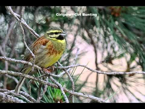 Chants d'oiseaux 02 - YouTube