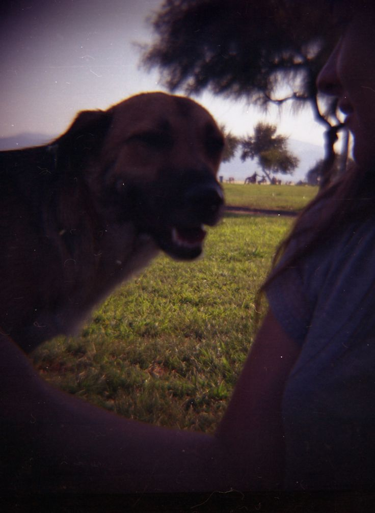 Friend  /// #lomography #dianaf