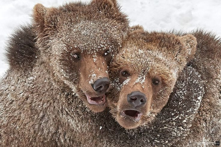 Hugging bears