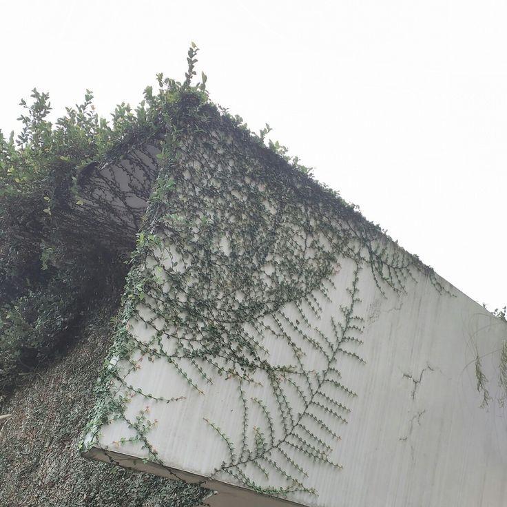 Plant vs Building