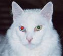 Cat Eye Problems should be extremely important to the cat owner. Cat's eyes have special characteristics that set them apart from other animals