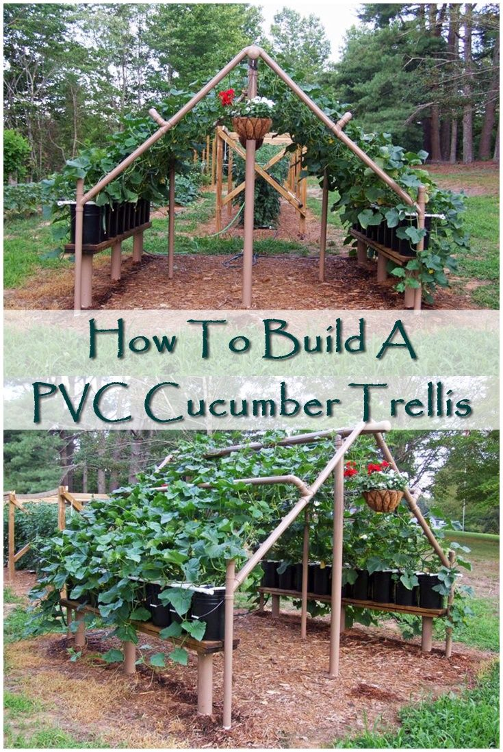 How To Build A Pvc Cucumber Trellis The Pvc Cucumber