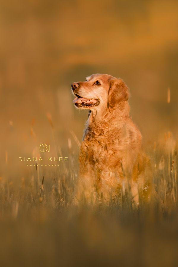 Hundefotografie Im Markischen Kreis Und Nrw Diana Klee Fotografie Hundefotos Hundefotografie Hunde