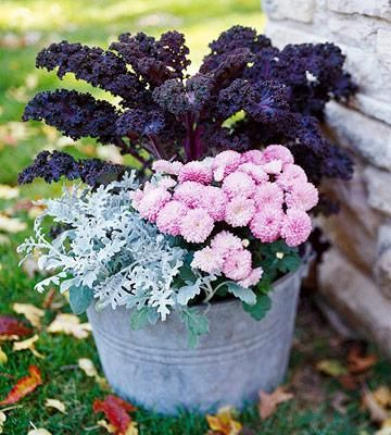 Redbor kale, pink mum, and dusty miller. When the mum is done, pop in a pretty pink or purple pansy! Fresh Fall Container Gardens | Midwest Living