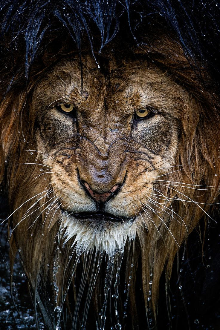 Amazing looking animal