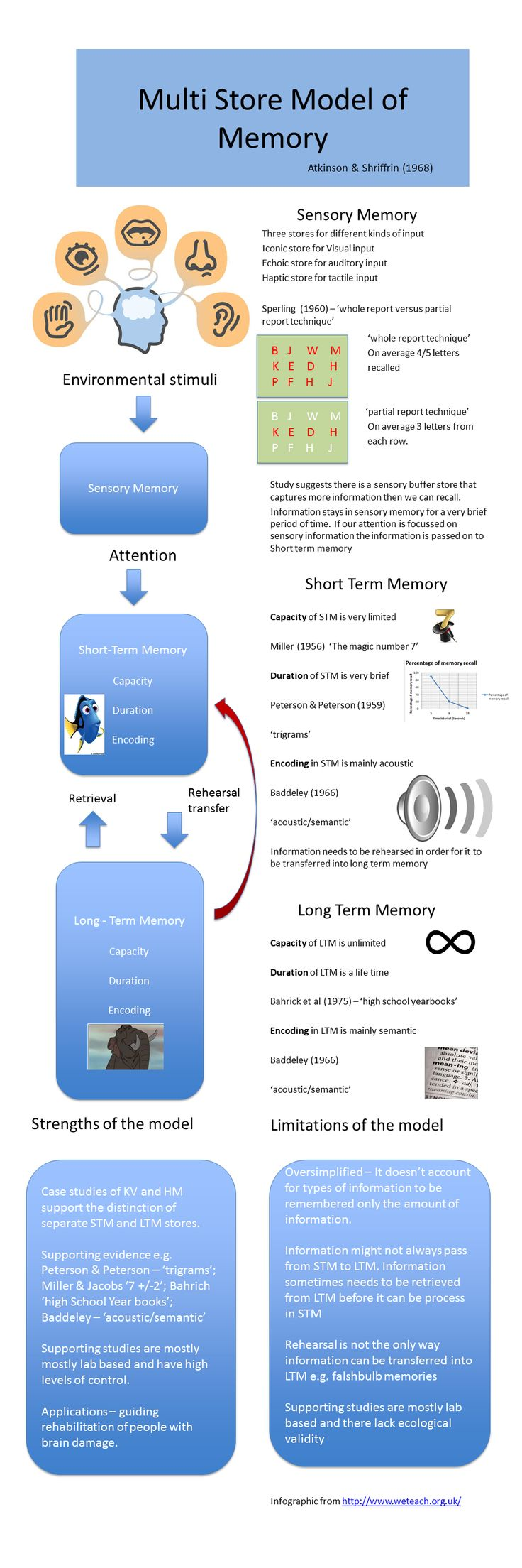 WeTeach infographic Multi-store Model of memory