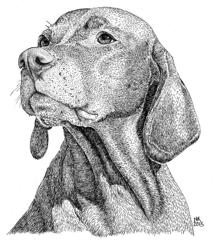 Betyar, Hongaarse Vizsla. Pen en Oost-Indische inkt; 2013. #dog