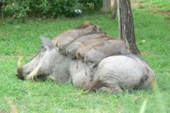So Comfortable mom!