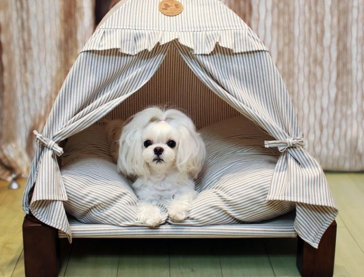 Best 25 Small Dog House Ideas On Pinterest Outdoor Dog