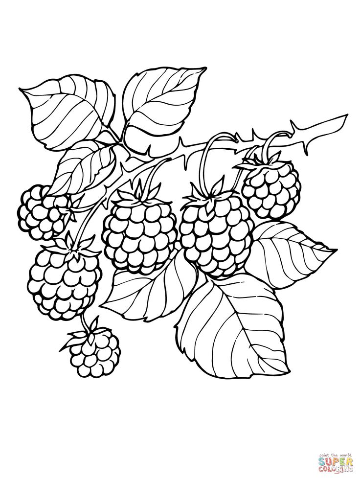 Blackberry Branch coloring page Food