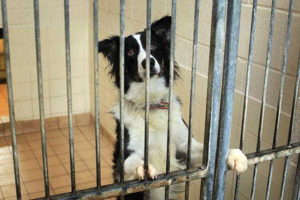 Check out this Amazing Border Collie Rescue