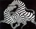 Zebra - Victor Vasarely