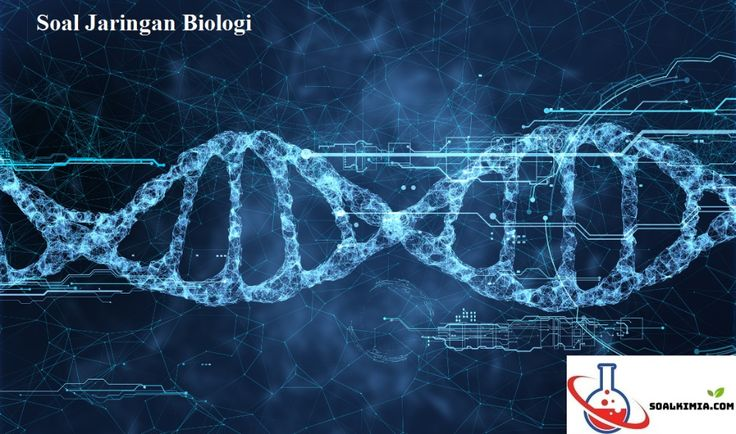99 Soal Jaringan Biologi Pilihan Ganda Pembahasan Jaringan Dalam Biologi Adalah Sekumpulan Sel Yang Memiliki Bentuk Dan Fungsi Ya Biologi Hewan Otot Lurik