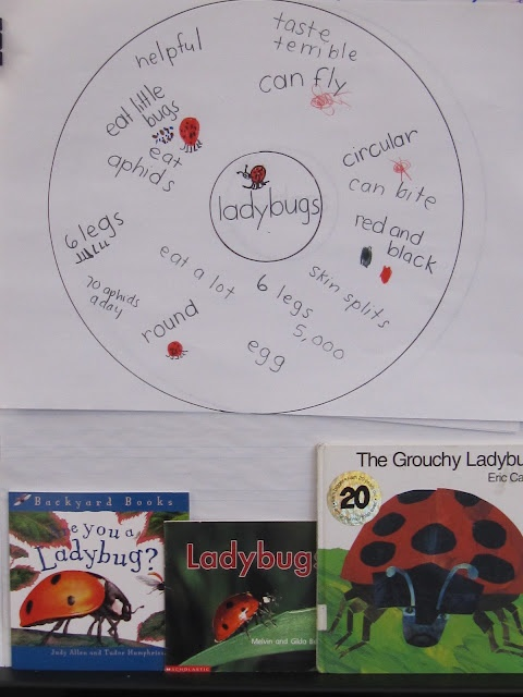 the grouchy ladybug essay example 2nd grade reading lessons:  rachel interviews lorna the ladybug  haley's grouchy birthday party : oct 16 : the dictionary mouse.