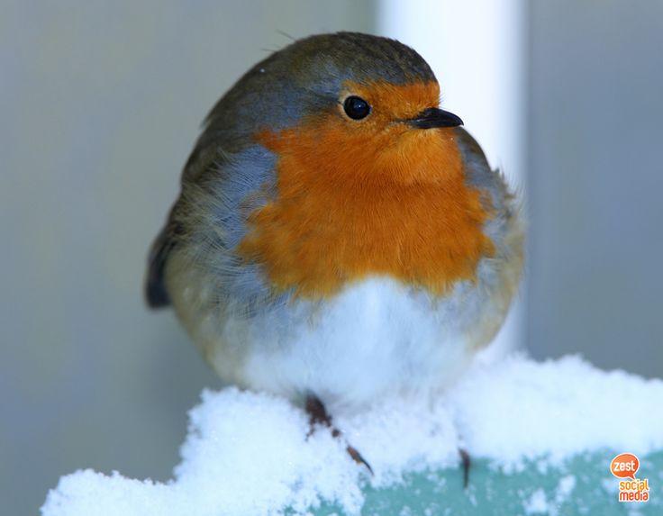 #winter #bird #snow