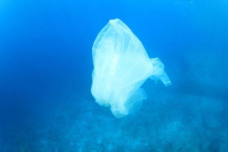 Sac plastique dans l'océan via Shutterstock Le plastique biodégradable est une arnaque