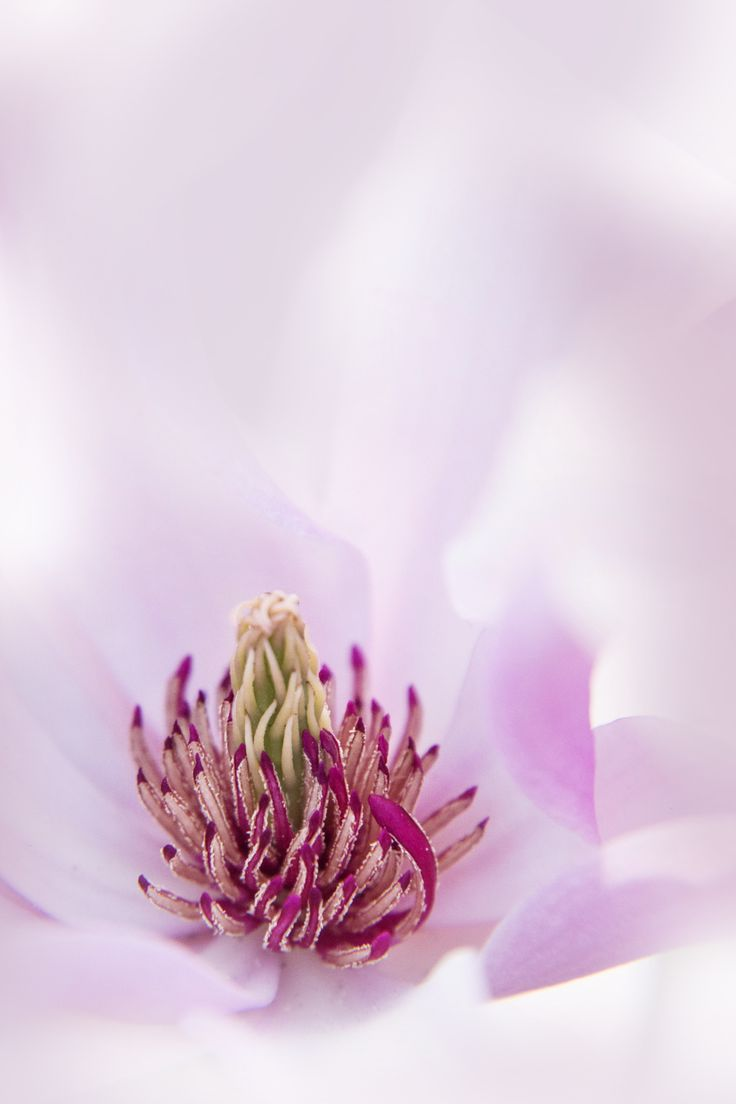The beauty inside by Anja Wessels on 500px