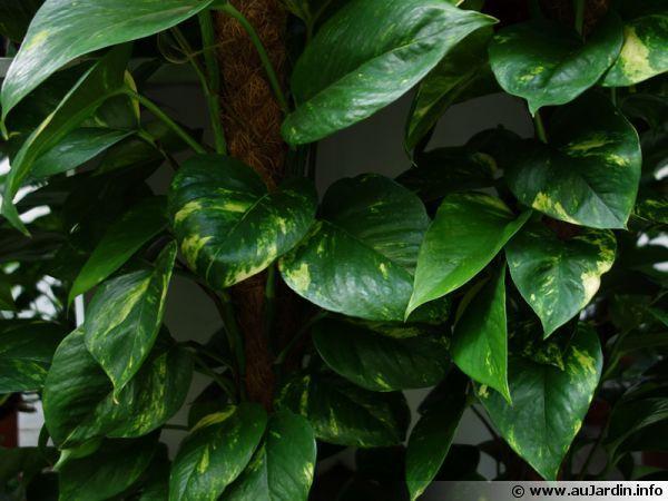 Les 29 meilleures images du tableau jardini re jardinage for Plante aloe vera chambre