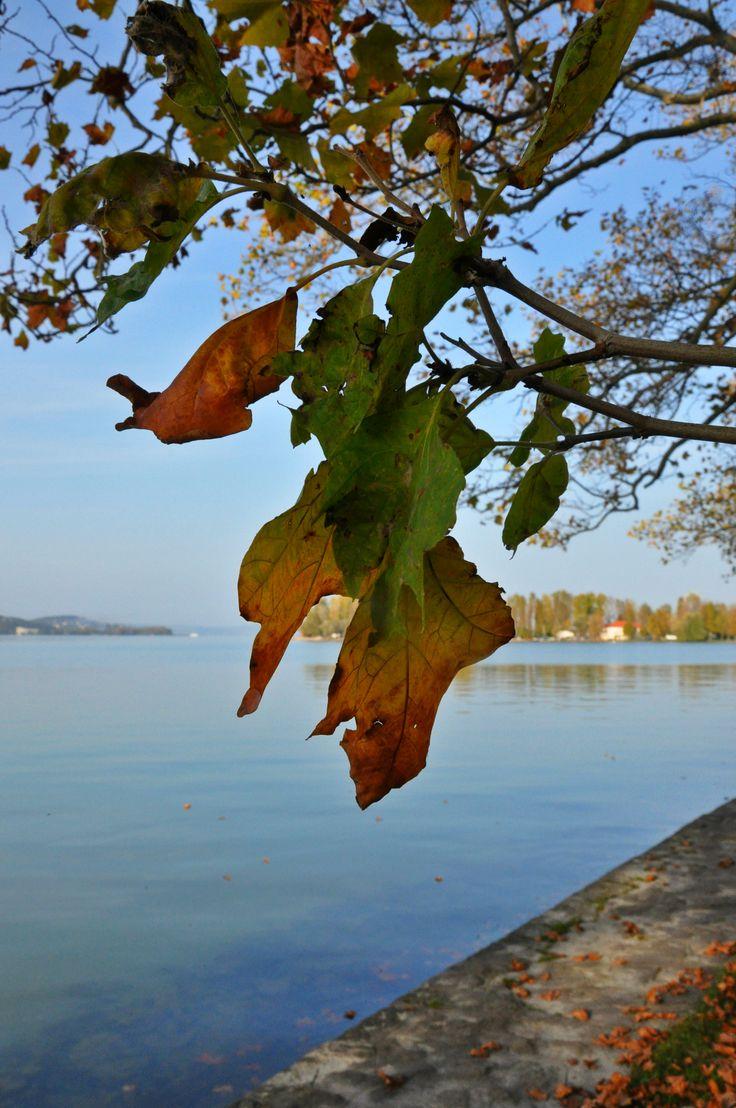 Balaton őszi színvilágban fürdőzve ősszel. Balaton. Hungary. Autumn. Leaf.