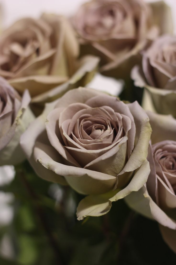 Amnesia Rose = Favorite Rose...would love to have these in my hand some day.