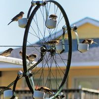 Bike Wheel Feeder  We have several backyard feeders, but this one is the most entertaining to watch. It is made out of an old bike wheel, four hubs and eight PVC caps. The wheel turns slowly as the birds fly on and off the seed-filled caps. We have observed 16 birds feeding at once, with others gripping the rim and spokes, repositioning themselves as they wait their turn. —Edward Bush, Houston, Texas